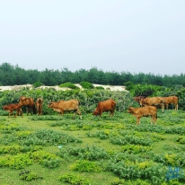 2 ngày trải nghiệm vùng đất Hoa vàng trên cỏ xanh 12